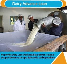 dairy loana-01